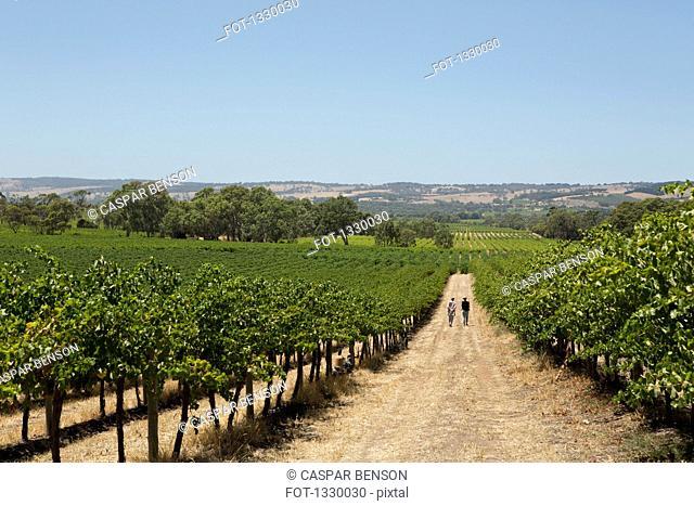 People walking on dirt road at vineyard