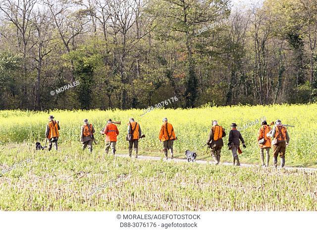 France, Grand Est Region, Bas-Rhin, Mackenheim, Hunting small game, Setting up tracking