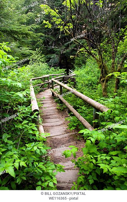 Trail to Shi Shi Beach - Neah Bay, Washington, USA