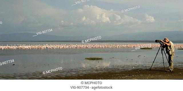 Photographing Flamingos at Lake Nakuru, Kenya. - 16/07/2008