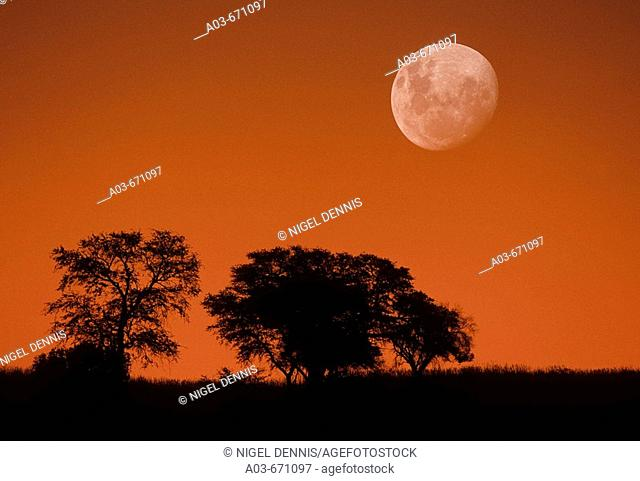 Dusk sky and moon, Kgalagadi Transfrontier Park, Kalahari, South Africa, image not digitally manipulated
