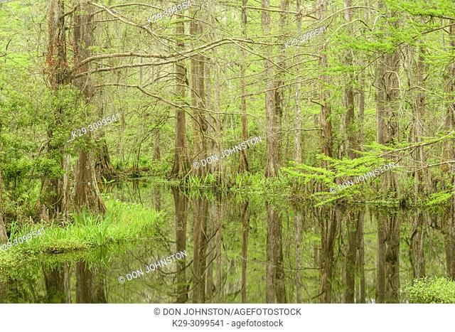 The Beaver Pond, near Bayou Castine, in spring, Northlake Nature Center, Mandeville, Louisiana, USA