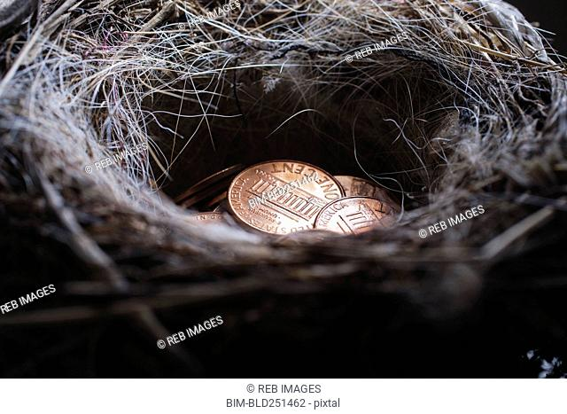 Pile of pennies in nest