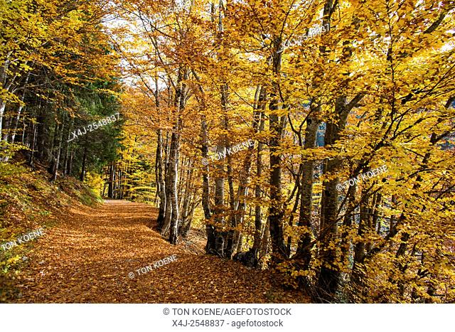 Trees during autumn in the French Alps