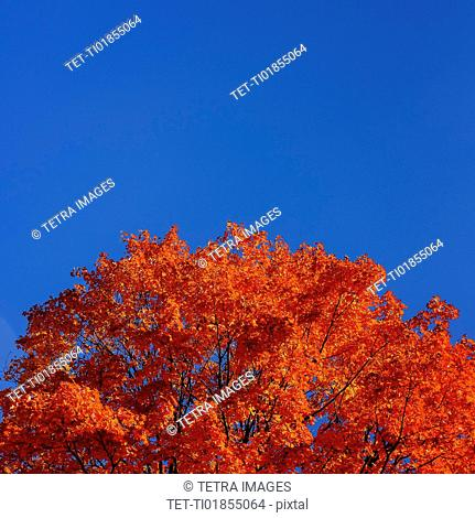 Tree against blue sky