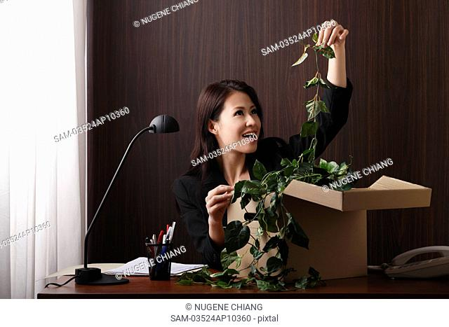 Young woman sitting at desk pulling a plant out of a box