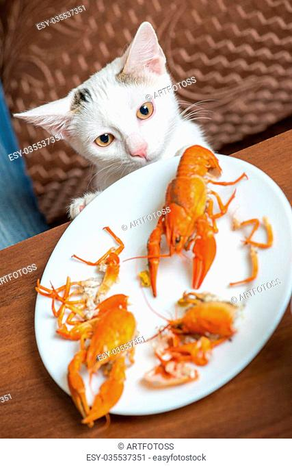 The cat examines a plate of crayfish on a table