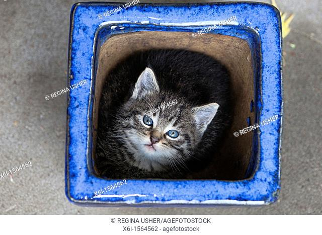 Kitten, hidding in plant pot, Lower Saxony, Germany