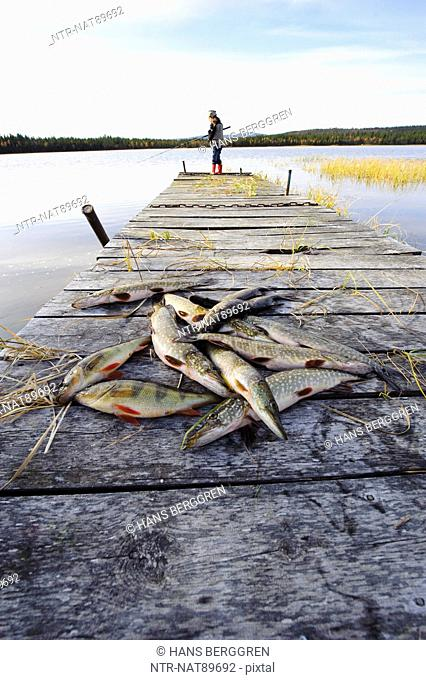 Dead fish lying down on jetty, girl fishing in the background