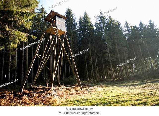High seat in the spruce timber forest, Hochsauerland, Sauerland, North Rhine-Westphalia, Germany