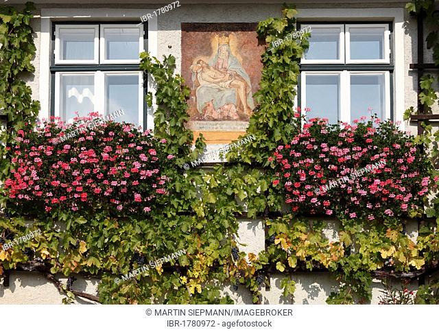 Mary icon on a house facade with vines and geraniums, Weingut Franz Hirtzberger vinyard, Spitz, Wachau, Waldviertel, Lower Austria, Austria, Europe
