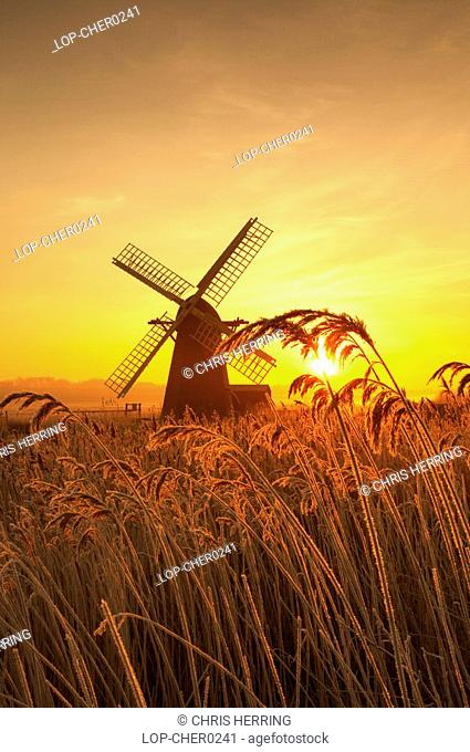 England, Suffolk, Herringfleet, A misty sunrise over hoar frosted reeds and Herringfleet Windmill in Suffolk
