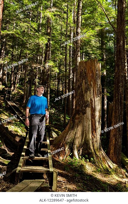 Man hiking on the Gavin Hill trail in the boreal rain forest, Sitka, Southeast Alaska, USA, summer