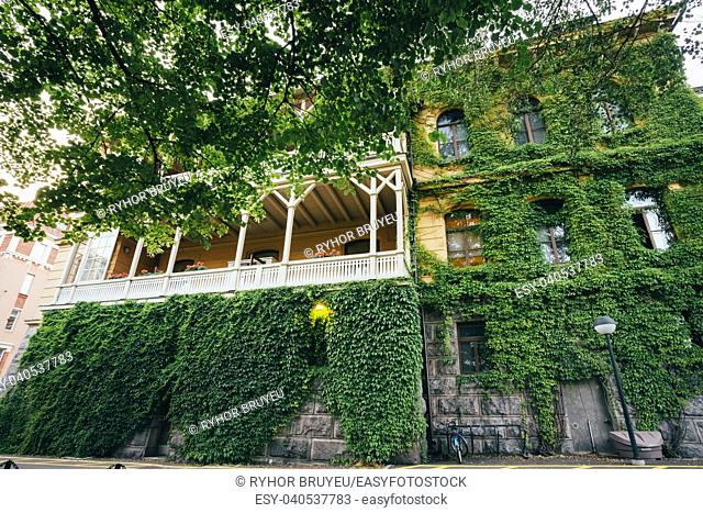 Wall Of A House With Window Covered Green Ivy