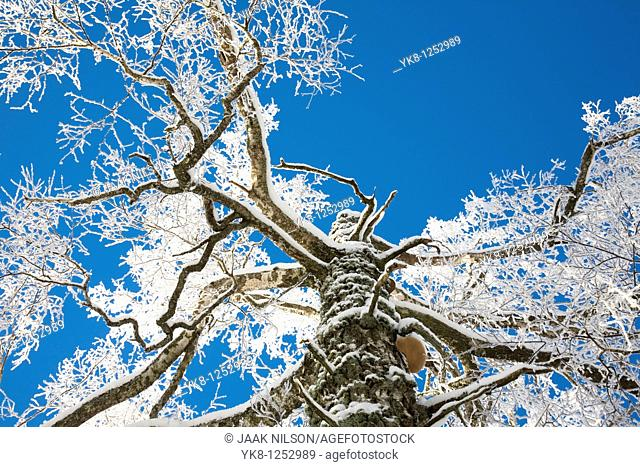 Branches Coverd with Snow and Frost
