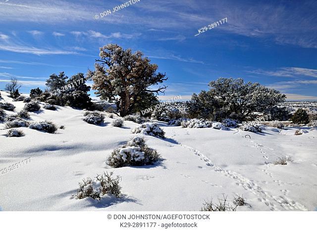Junipers and fresh snow at The Neck, Canyonlands National Park, Utah, USA