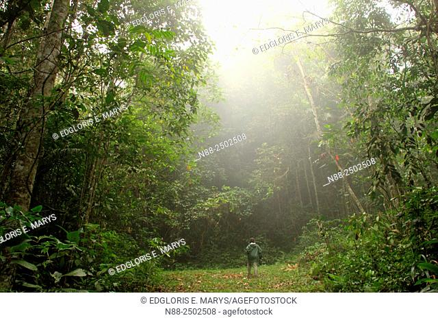 Explorer in the cloudy forest, Jungle of Palmichal, Venezuela