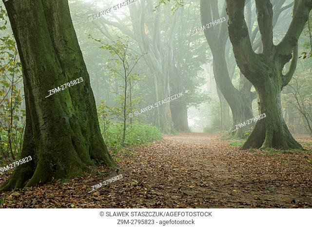 Misty autumn afternoon in Stanmer Park, East Sussex, England. South Downs National Park