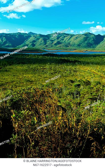 Parc de la Riviere-Bleue Blue River Provincial Park, Province Sud Great South Region, Grand Terre main island, New Caledonia