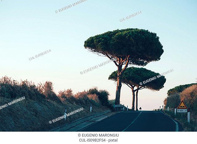 Trees on the roadside, Sorso, Sassari, Italy