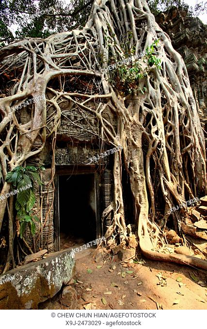 The roots of a fig tree invade a gallery at the Ta Prohm temple in Angkor, Cambodia