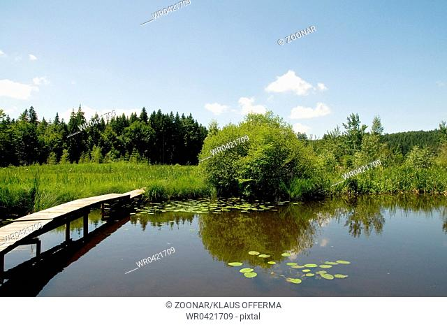Hackensee - lake in the summer