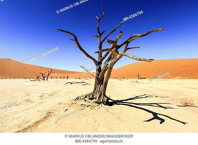 Dead trees in Dead Vlei, Sossusvlei, Namib Desert, Namib-Naukluft National Park, Namibia