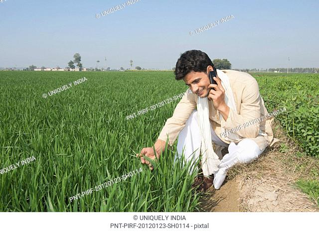 Farmer talking on a mobile phone in the field, Sonipat, Haryana, India