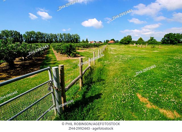 Boughton Monchelsea village, Kent, England. Fields, trees and fence
