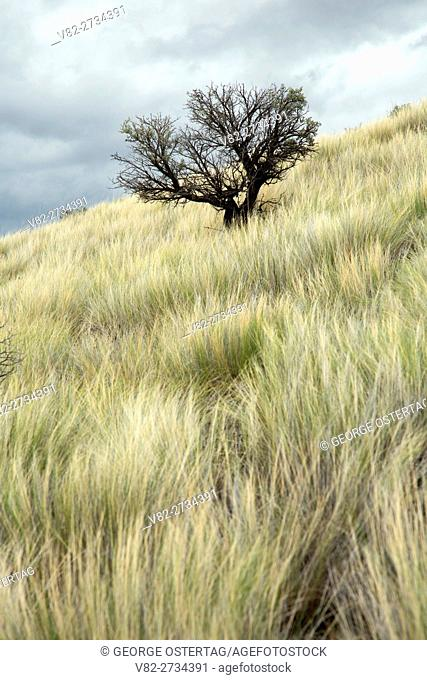Sagebrush grassland, John Day Fossil Beds National Monument-Painted Hills Unit, Oregon
