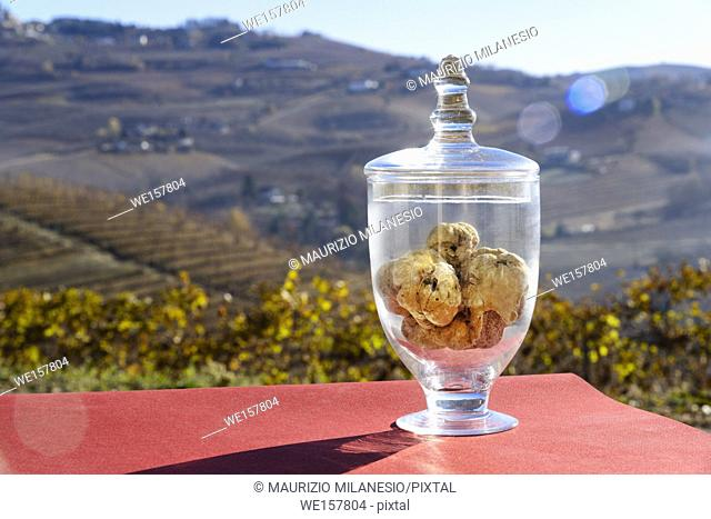 Grinzane Cavour, Piedmont Italy, Wonderful White truffle inside a transparent glass jar, on the bottom the fantastic Langhe hills with vineyards in the fall
