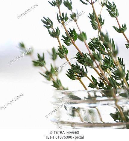 Thyme in jar