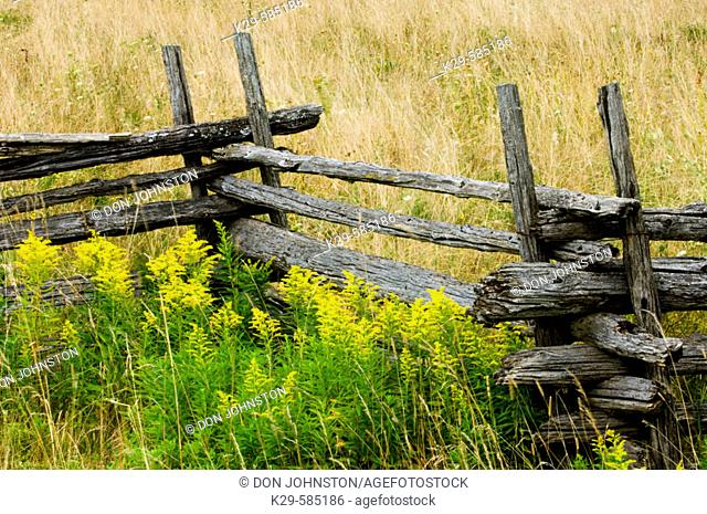 Cedar split rail fence and goldenrods in late summer. Manitoulin Island. Ontario