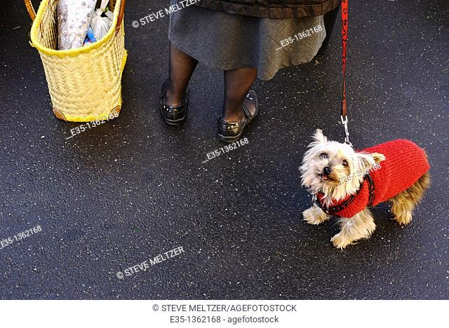 A dog wearing a sweater against the cold at a market