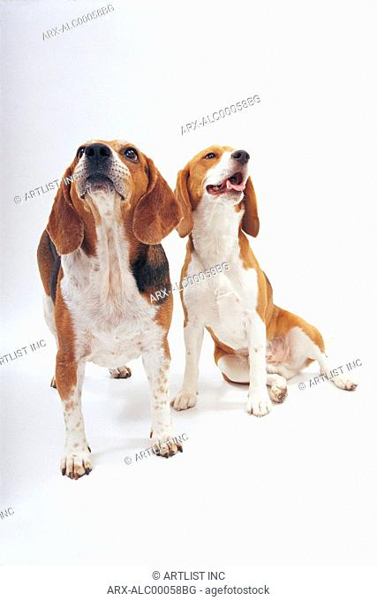 Two dogs looking up