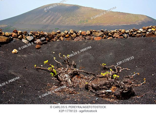 Stratvs Wine celler in La Geria in Lanzarote Island  Belongs to the Canary Islands and its formation is due to recent volcanic activities  Spain  In La Geria...