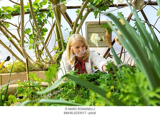 Caucasian scientist using digital tablet in greenhouse