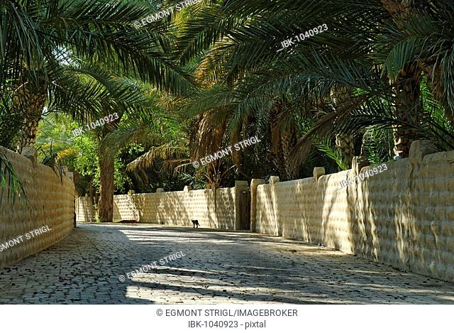 Palm garden in the Al Ain Oasis, Emirate of Abu Dhabi, United Arab Emirates, Arabia, Near East
