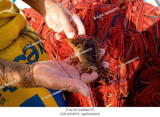 Fishing with trammel net, Sorrento coast, Gulf of Naples, Campania, Italy