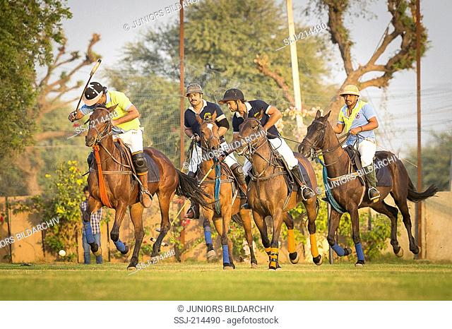 Polo Pony. Players disputing the ball in a polo match. Rajasthan, India