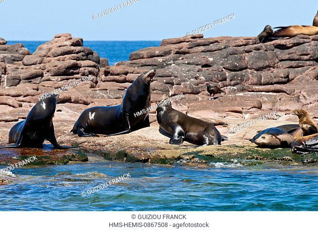 Mexico, Baja California Sur State, Sea of Cortez, listed as World Heritage by UNESCO, Isla Espiritu Santo, sea lions colony