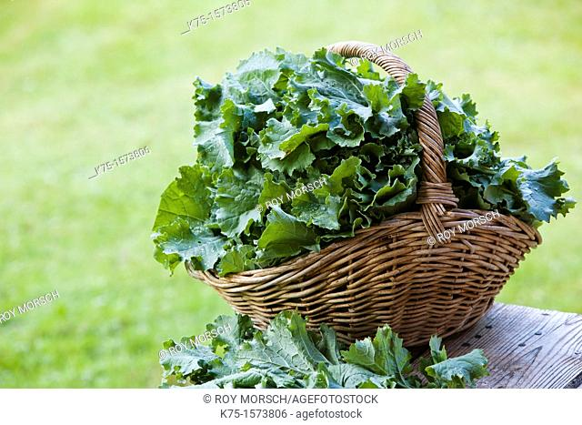 basket of fresh, organic kale