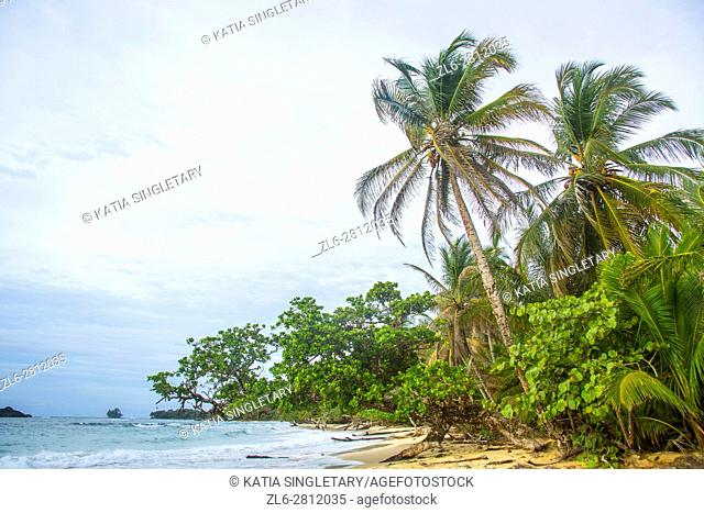 Horizontal photo of the palm trees and sand on the Beautiful white beaches on Red Frog Beach Resort where you can do some amazing snorkleling