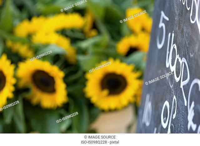Sunflowers and blackboard
