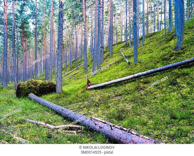 Droped tree in wild forest vivid landscape