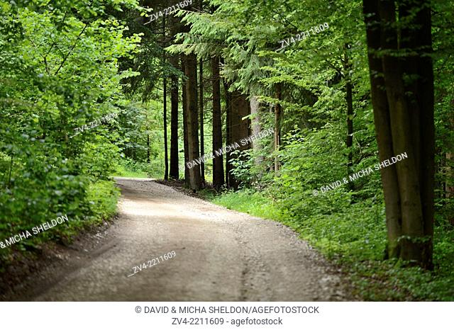 Landscape of a little road going through the forest, Upper Palatinate, Germany