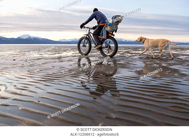 Father with toddler son ride a fatbike on beach in Homer with their dog running alongside, Kenai Peninsula, Southcentral Alaska