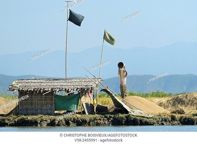 Myanmar, Rakhine State, Mrauk U region, Rice winnowing on the banks of Kaladan river