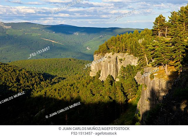 Scots Pine Pinus sylvestris  Laguna Negra y los Circos Glaciares de Urbion Natural Park  Soria Province  Castilla y Leon  Spain