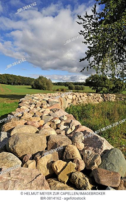 Stone wall made of rubblestone, Mecklenburg-Vorpommern, Germany